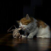 ... нашлась любимая игрушка... :: Александр Бойко