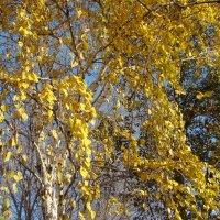 Золото ноября :: марина ковшова