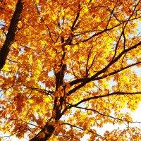 Осень :: Женя Беспалов