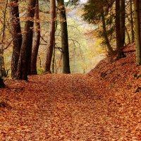 Осенний лес :: Людмила Шнайдер