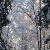 в зимнем лесу :: Елена
