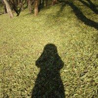 Тени на ковре из листьев :: марина ковшова