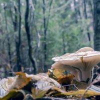 В осеннем лесу. :: Александр Крылов