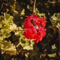 Flower :: Ksyusha Pav