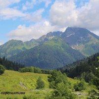 Альпийские луга :: Юлия Васильева