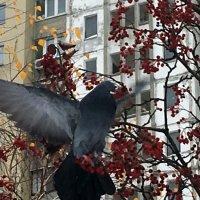 Зима и голуби :: Сергей Рубан