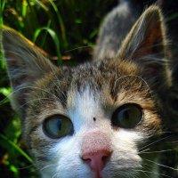 Милый мой котёнок. :: оля san-alondra