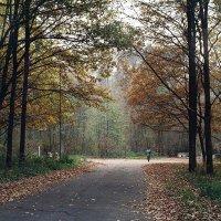 Осень в парке :: Сергей Тарабара