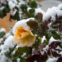первый снег :: Елена Константиниди