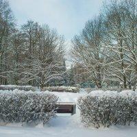 Снежный ноябрь 3 :: Виталий