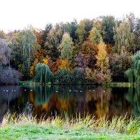 Autumn's colors :: Sergey Sergaj