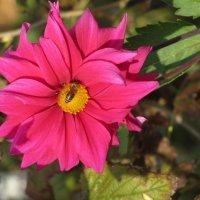 Пчелка согнала бабочку :: Герович Лилия