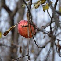 Осень в Эдеме :: Игорь Попов