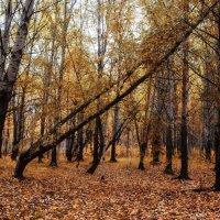 В парке :: Наталья Копылова