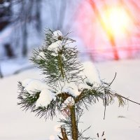 Зима :: Валерий Бочкарев