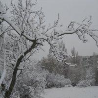 Снежная картинка :: Галина