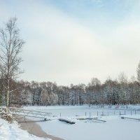 Снежный ноябрь 6 :: Виталий