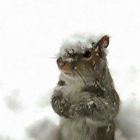 опять будильник мыши погрызли :: Владимир Беляев ( GusLjar )