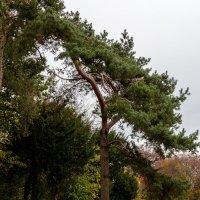 Осень в южном парке Дюссельдорфа :: Witalij Loewin