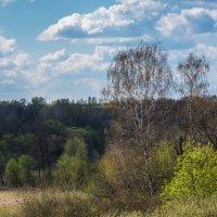 Такая была весна... :: Владимир Безбородов