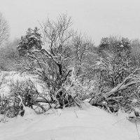 Черно-белая зима :: Павлова Татьяна Павлова