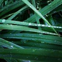 после дождя :: екатерина