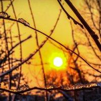Зимнее утро... :: Арина