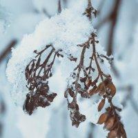Осень, которая стала зимой :: Маргарита Б.