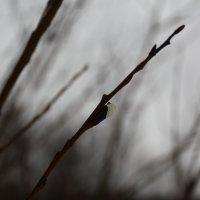 Осенняя :: Татьяна Стаканова