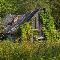 Дом во хмелю... :: Владимир Ильич Батарин
