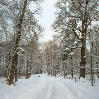 Снежный ноябрь 14 :: Виталий
