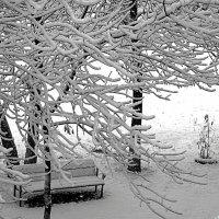 Ложится иней тихо на деревья.. :: Андрей Заломленков