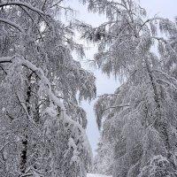 Дорога в снежное царство :: Николай Белавин