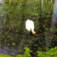 Очарование весны. Лебедь на озере :: Nina Yudicheva