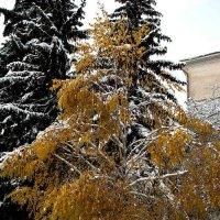 Пришла зима. :: Николай Сидаш