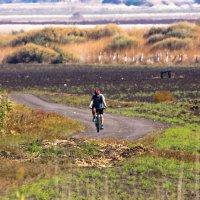 Одинокий велосипедист :: Николай Волков
