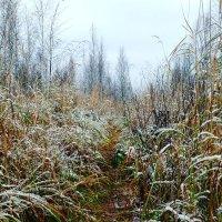 тропинка. первый снег. :: екатерина