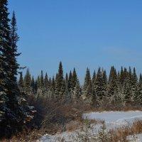 Поздняя морозная осень :: Вера Андреева