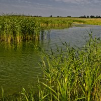 Озеро Юрово :: Александр Березуцкий (nevant60)