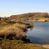 Лесное озеро :: Нина Бутко