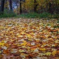 Вчера была такая осень. :: Laborant Григоров