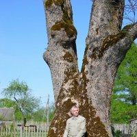 Вот это дерево!!! :: Андрей Буховецкий
