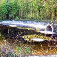 Осень в парке :: Ольга Голубева