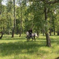 Красивое место, красивая лошадь - всё, что нужно для красивого отдыха :: Владимир Безбородов