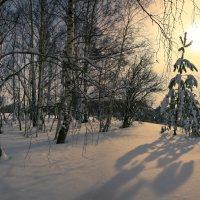 Околдован лес стоит, чудной жизнью он блестит 8 :: Сергей Жуков