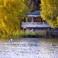 У озера :: Nina Streapan