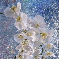 Орхидея зимой :: Ирина Приходько