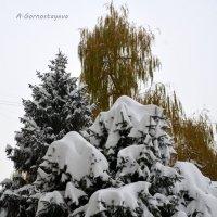 Зима явилась раньше срока. :: Anna Gornostayeva