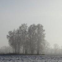 Морозная осень. :: nadyasilyuk Вознюк