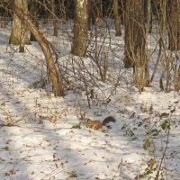 В зимнем лесу. :: Ирина Нафаня